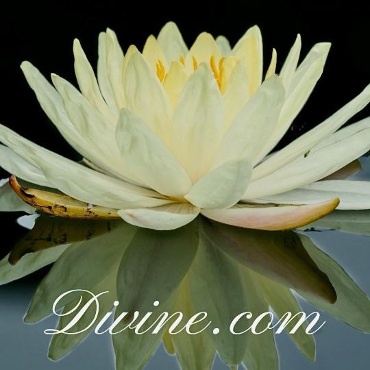 Flower with Divine.com