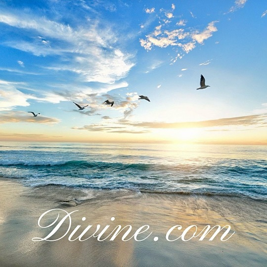 Sunset with Divine.com